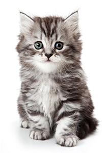 Thumb cg adopts a kitten